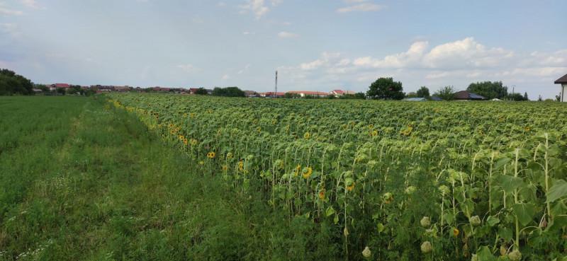 Vand 7,78 ha teren intravilan agricol in Platonesti, IL